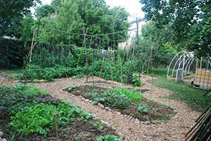 PHOTO: Garden