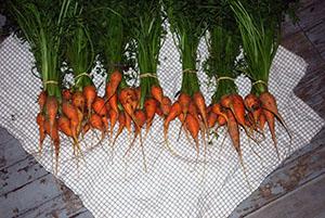 PHOTO: Carrots